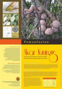 poster Manfaat Akar Kuning