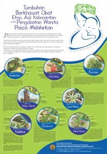 9 Poster Tumbuhan Berkhasiat Obat Etnis Asli Kalimantan untuk Pengobatan Wanita Pasca Melahirkan