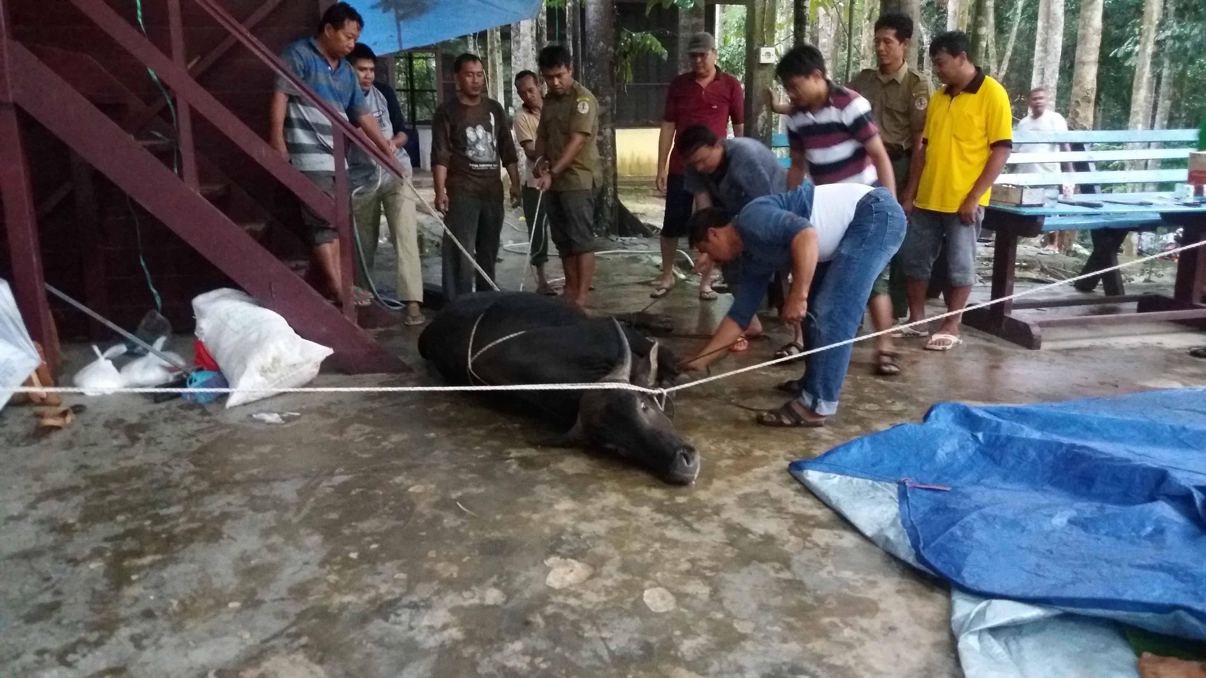 Balitek KSDA membagikan 310 kantong daging kurban kepada warga di sekitar KHDTK Samboja