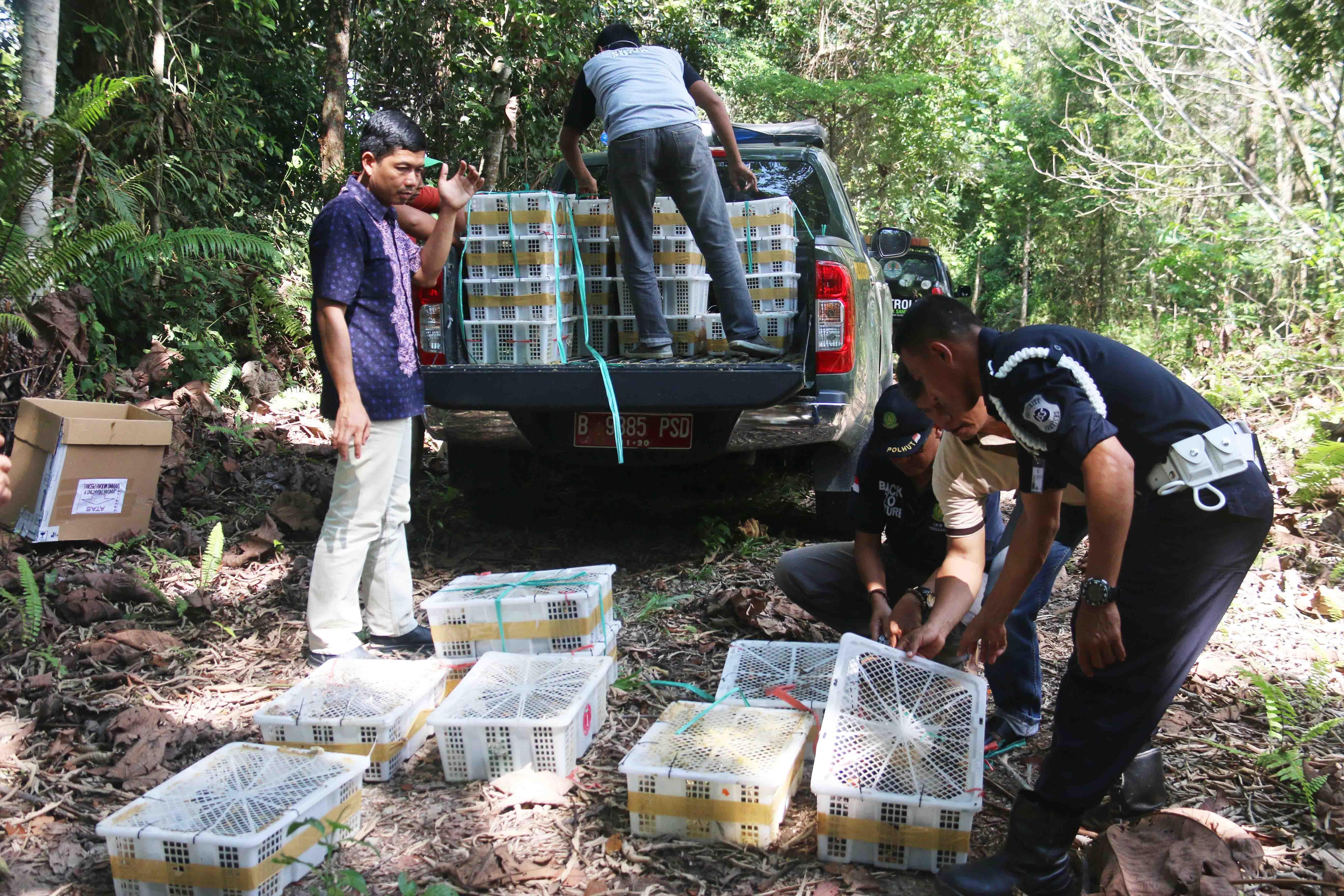 426 Burung Hasil Selundupan Dilepasliarkan di KHDTK Hutan Penelitian Samboja